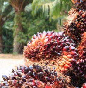Minyak Sawit : Malaysia Patuhi Standart Kelestarian