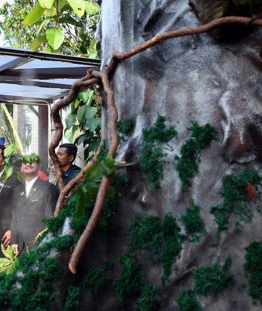 Pokok Merbau Dipilih Pokok Kebangsaan Malaysia